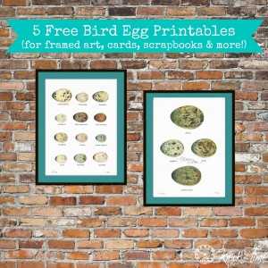 1920's Bird Eggs Printables for Framing, Cards, Scrapbooking, and more