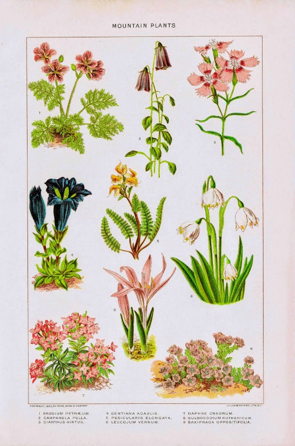 botanical nature flowers