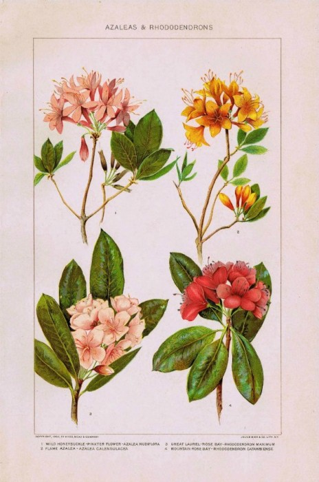 flowers and botanical prints