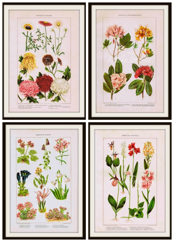 Free nature flower printables from Knick of Time - KnickofTime.net