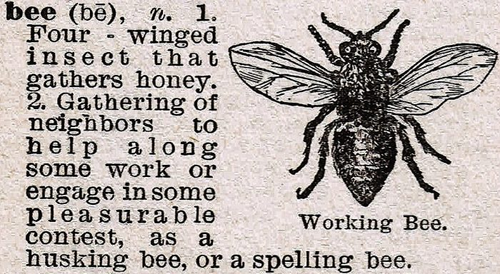 bee dictionary definition | knickoftime.net