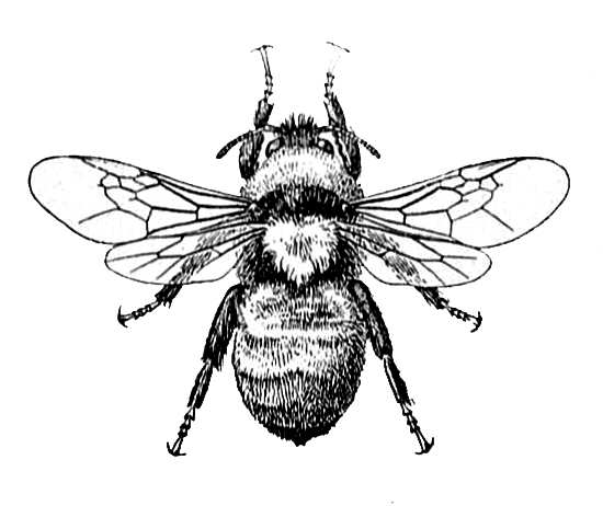 bee graphic image | knickoftime.net