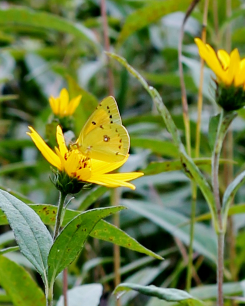 Wildflowers and Yellow Butterfies Rural Photography by Knick of Time