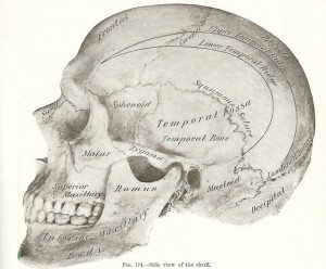 Halloween Skeleton Images -1893 Gray's Anatomy Illustrations