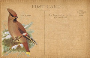 Antique Postcards with Bird Prints