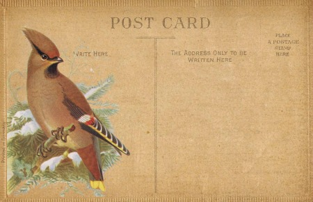Antique-Postcard-Printable-with-Waxwing-Bird-Image winter bird