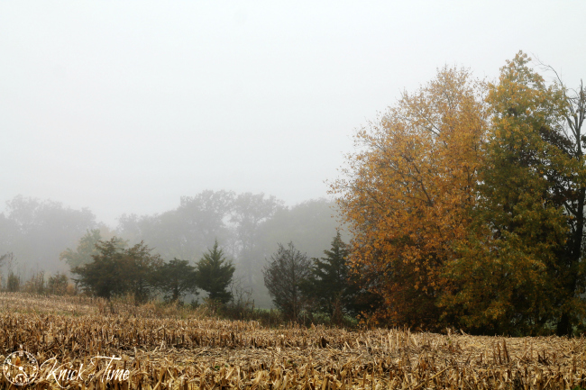 Corn Fields and Forest on a Foggy Autumn Day