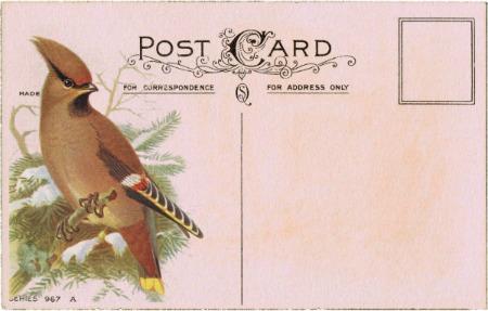 antique postcard winter bird 2