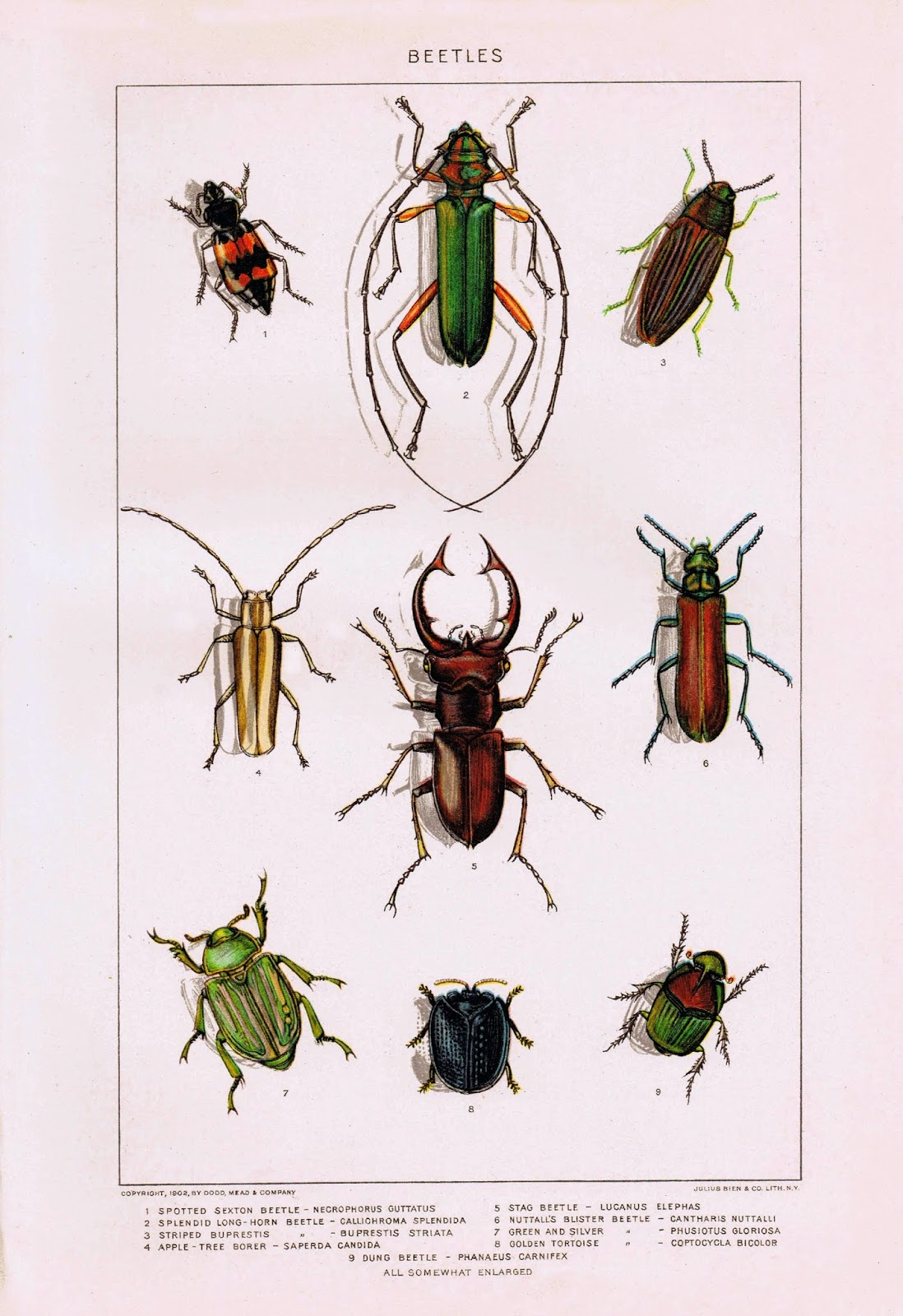 Antique Nature Printable - Insects {Beetles}