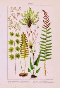 Nature Garden Flowers Image – Ferns
