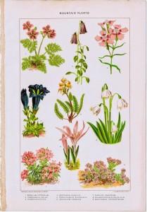 Antique Nature Printable – Mountain Plants