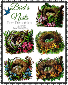 Bird Nest and Egg Graphics – 5 Antique Die Cut Images