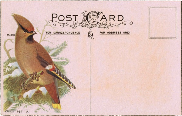 antique postcard with winter bird - KnickofTime.net