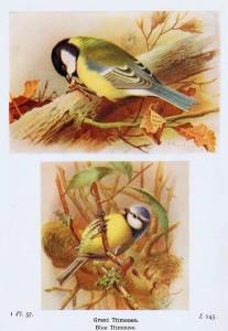 Antique Bird Illustrations Instant Art Printables