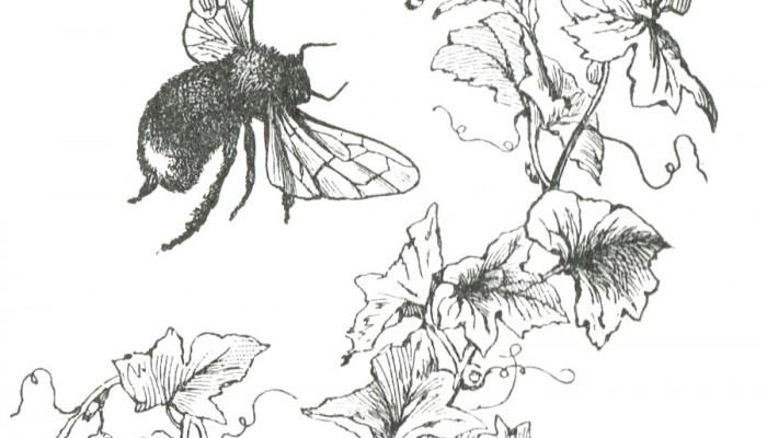 Bee Image Clip Art from McGuffey's Reader