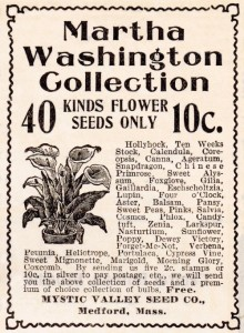 Flower Seeds Co. Advertisement – Mystic Seed Co.