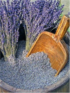 Lavender Seeds – A Packet Full of Hope