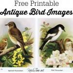 bird graphics