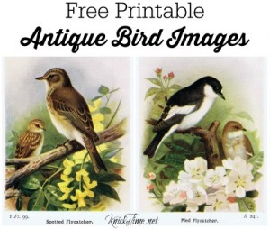 Antique Book Plate Bird Prints
