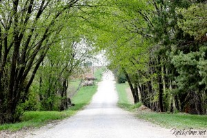 Springtime on a Country Road