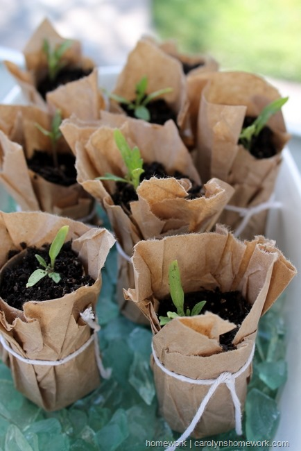 brown paper project seed pots