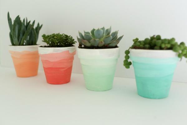 ombre succulent pots