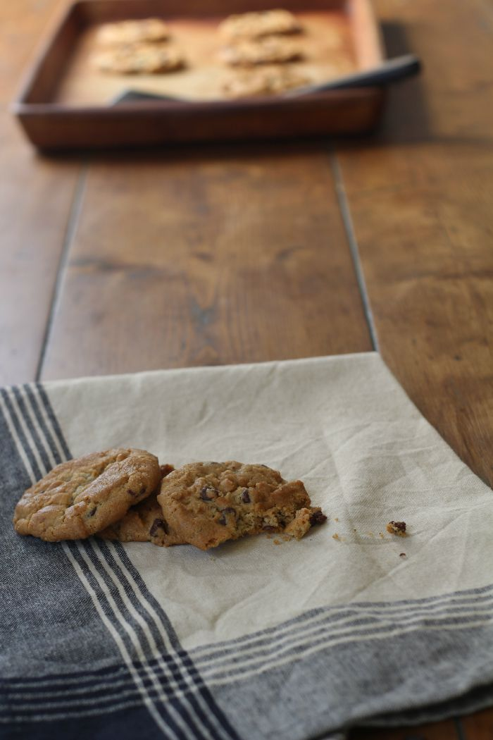 chocolate chip cookie photo