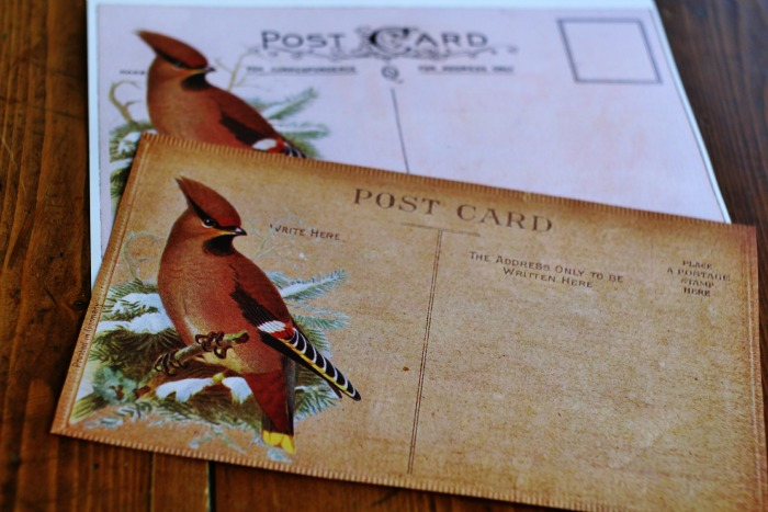 Antique Postcards with Birds Printables - KnickofTime.net