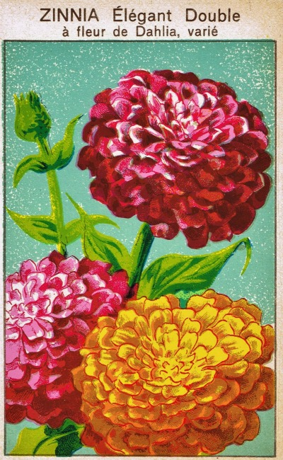 seed packet labels zinnia