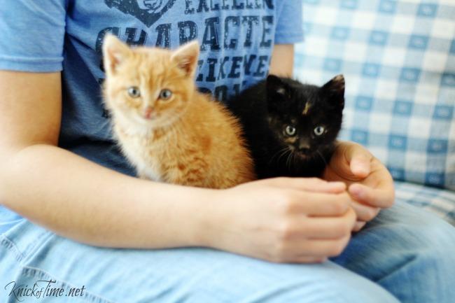 cute lost baby kittens | www.knickoftime.net