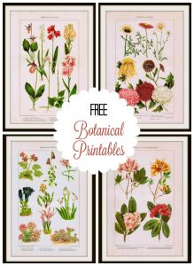 Botanical Printables for Summer Decor
