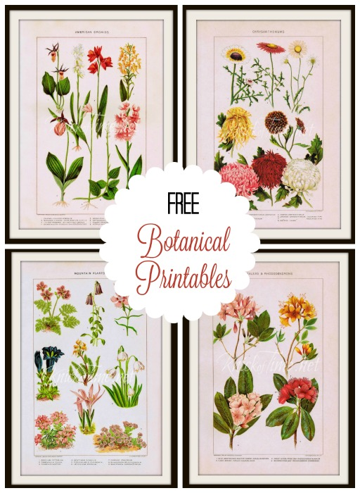 Free printable antique botnical images - KnickofTime.net