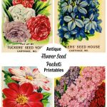 seed packet printables, shop talk & custom stencils