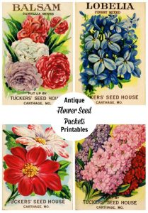 seed packet printables & shop talk