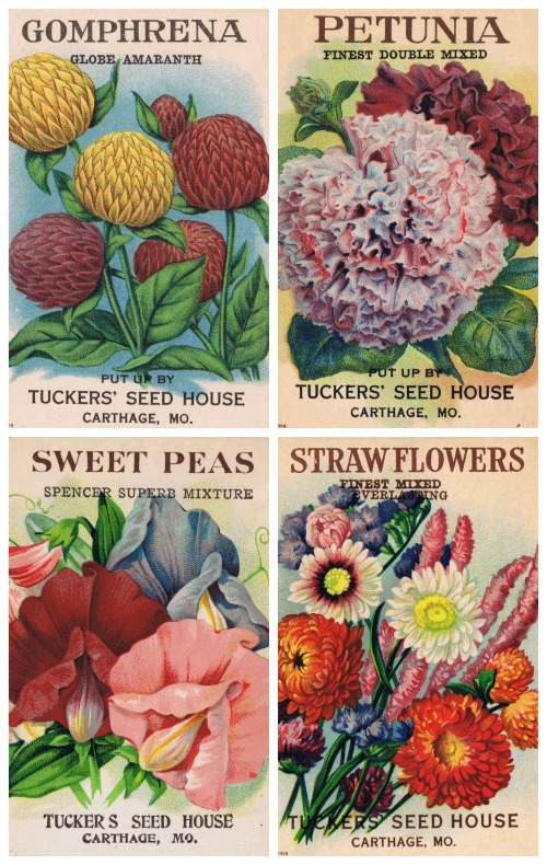 1920's Flower Printables Antique Seed Packets - KnickofTime.net