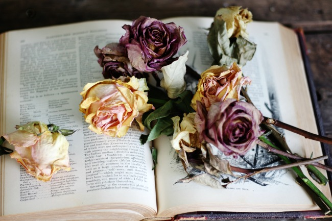 dried roses flowers on antique book