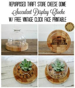 Turn a thrift store cheese serving dome into a beautiful display for small succulents - KnickofTime.net