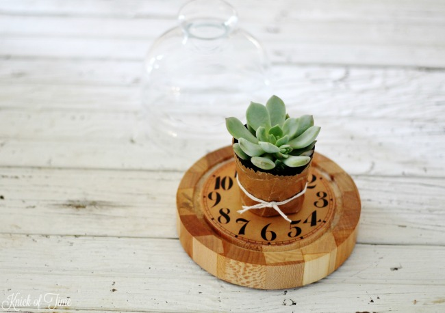 Repurpose a cheese dome as a succulent display - KnickofTime.net