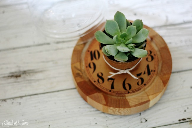A small cheese dome makes a beautiful display for small succulents - KnickofTime.net