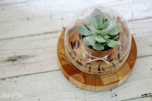 Decoupage a vintage clock face on a cheese dome cloche to display small succulents - KnickofTime.net