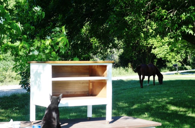 dresser horse cat - Knick of Time