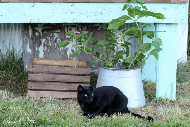 potting bench farm cat