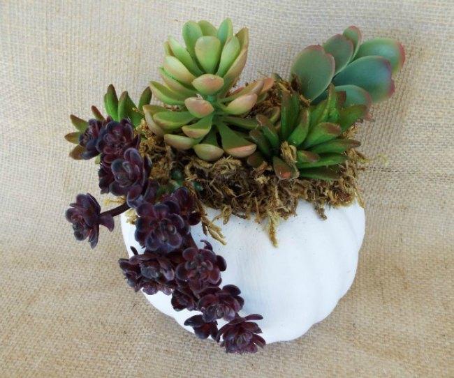 succulent-pumpkin-planter