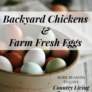 Keeping backyard chickens is one of the reasons we love country living so much. We're rewarded with beautiful farm fresh eggs daily that taste better than any egg from a commercial flock | knickoftime.net