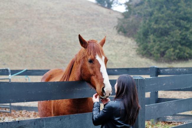 horse love | knickoftime.net
