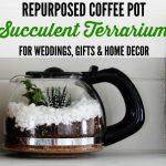 Succulent Terrarium Tutorial Inexpensive Gift, Home or Coffee Shop Decor