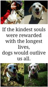 If the kindest souls were rewwarded with the longest lives, dogs would outlive us all | www.knickoftime.net
