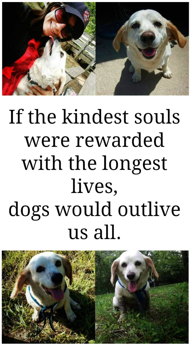 If the kindest souls were rewwarded with the longest lives, dogs would outlive us all | A dedication to Jake, the most loyal dog in the world. | www.knickoftime.net