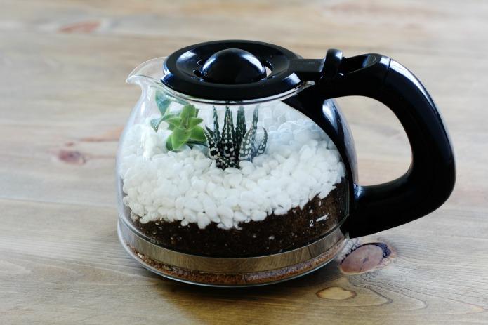 Succulent Terrarium Tutorial Inexpensive Gift Home Or Coffee Shop