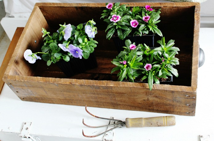 Get ready for spring flower planting with a DIY rustic drawer tray to carry your nursery flowers | www.knickoftime.et